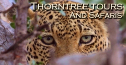 Thorn Tree Tours and Safaris -